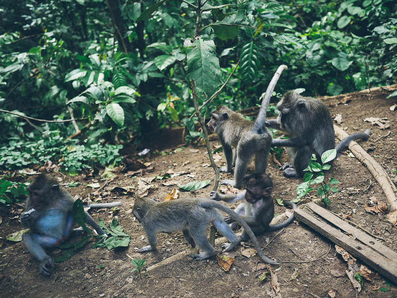 Monkey Forest Ubud monley family
